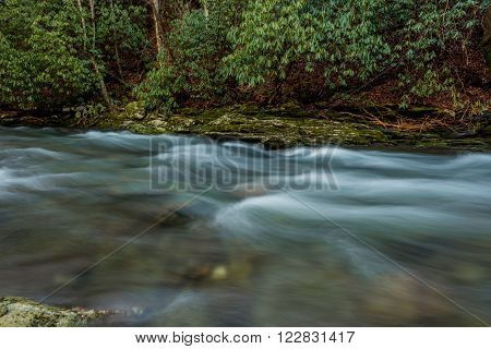 Water rushing past rhododendron trees in Deep Creek in the Great Smoky Mountains National Park