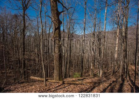 Winter view of Appalachian Forest in the Great Smoky Mountains National Park