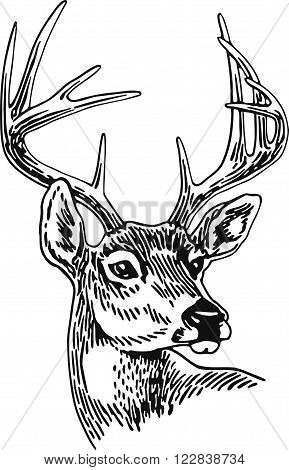 10 Point Buck. Deer, Animal Head, Stag, Illustration, Black And White
