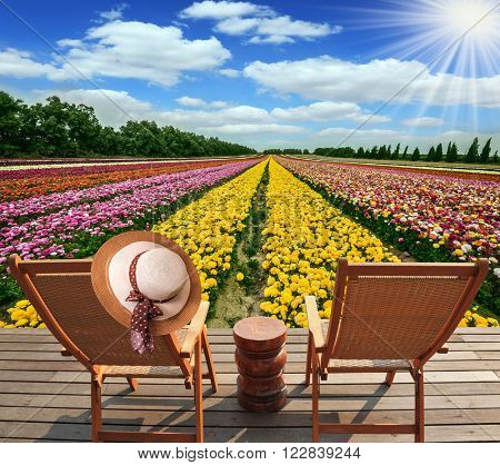 Flower kibbutz near Gaza Strip. Spring flowering buttercups. The sun's rays shine from clouds. Two chairs and table standing on wooden platform