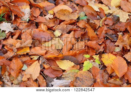 Withered fall leaves background in autumn park