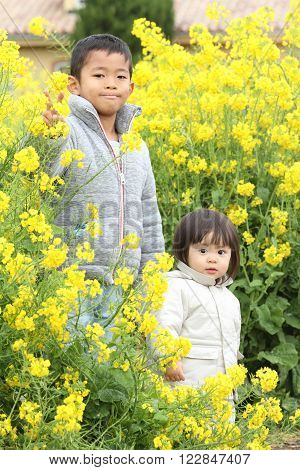 Japanese brother and sister (6 years old boy and 1 year old girl) in yellow field mustard