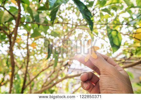 Hand holding Gardenia carinata Wallich flower with sun flare effect through flower, and de focus Bokeh background