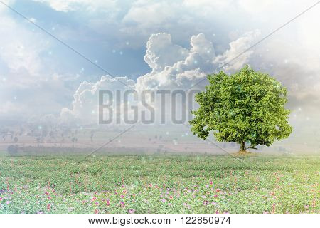 Big Santol Tree On Flowers Field And Sky Background With Happy Morning Sunlight