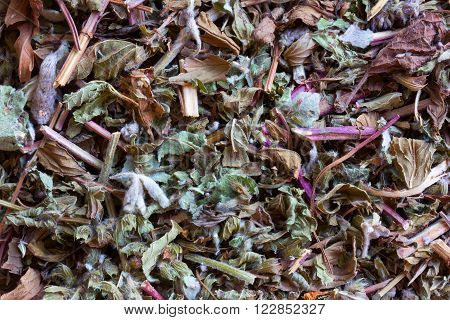 Herbal teas herbs, homeopathy. vegetable raw materials for preparation of tea beverages, medicinal product. alternative medicine