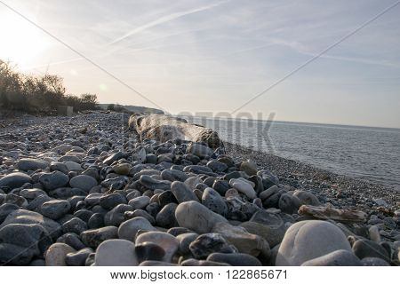 Desolate beach with rocks in the sunset in Denmark