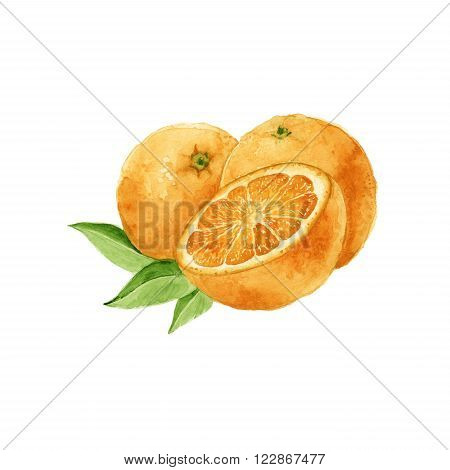 watercolor three round juicy oranges isolated on white.