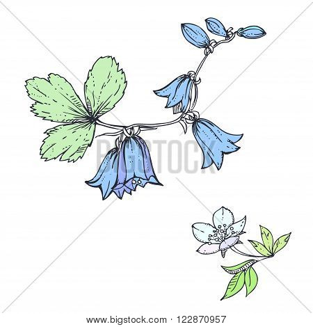 hand drawn ink floral ornament with flowers bluebell and leaves
