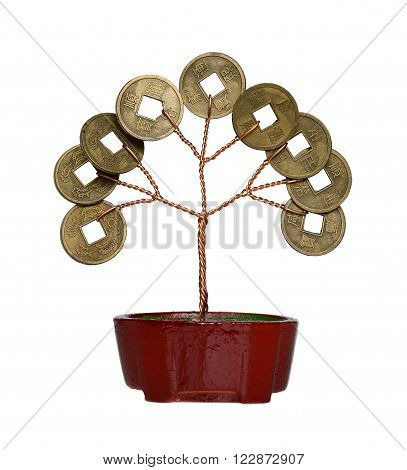 The money tree isolated on a white background.