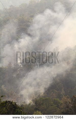 Wildfire destroy tropical forest in northern thailand. ** Note: Visible grain at 100%, best at smaller sizes