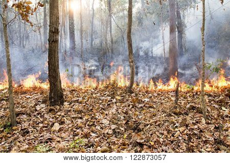 Wildfire destroy tropical forest in northern thailand.