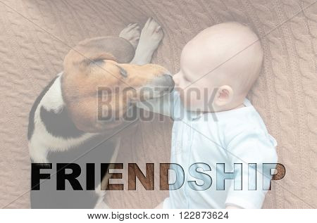 Newborn Baby  And Estonian Hound Lying On Sofa