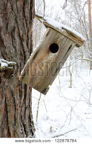 old starling-house on tree in forest at winter time