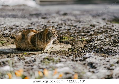 Cat sitting on ground in spring outdoor, copy space