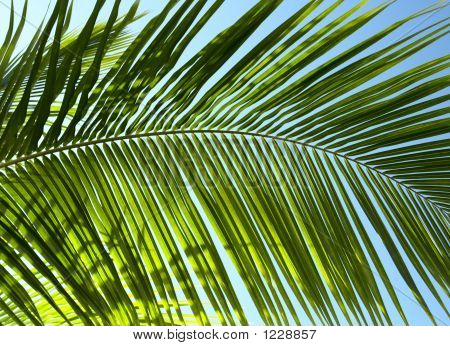 Palm Tree Leaf N5