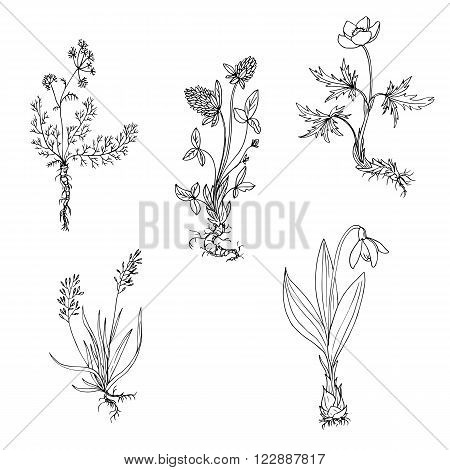 vector wild plants with roots, ink drawing herbs, hand drawn vector illustration