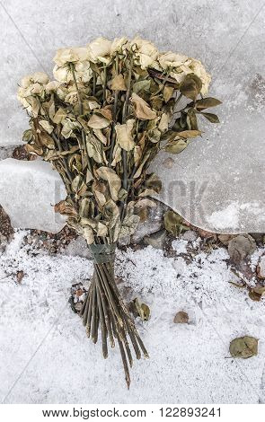 armful of old dry withered roses lie on the cold broken ice