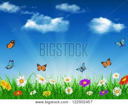 daisy vector background  summer design flower green garden nature illustration. Spring background of blue sky with grass and butterfly, daisies and bokeh lights.