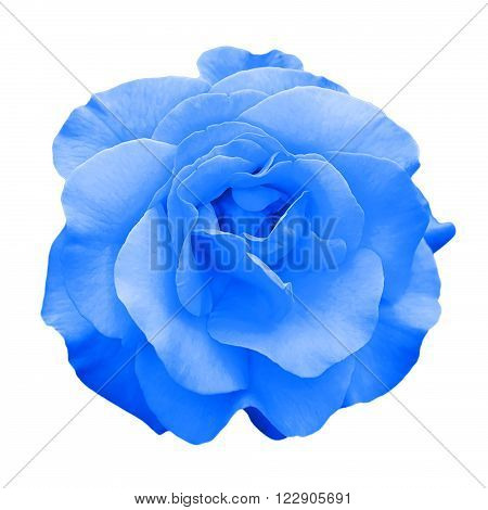 Tender blue rose flower macro isolated on white