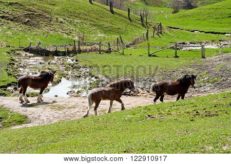 Three horses wandering in the lush, green pasture.