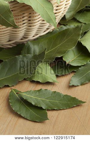 Heap of fresh green bay leaves in a basket