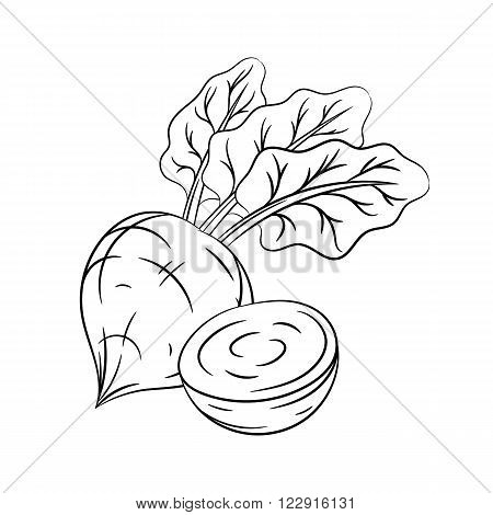 Beetroot. Vector hand drawn beetroot illustration isolated on white background - stock vector