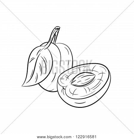 Plum. Vector hand drawn plum illustration isolated on white background - stock vector
