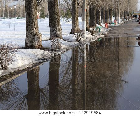 old poplar trees and reflection in water, followed by snow and bushes. far people go