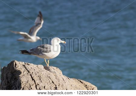Seagull on a rock against the backdrop of the sea and another seagull flying