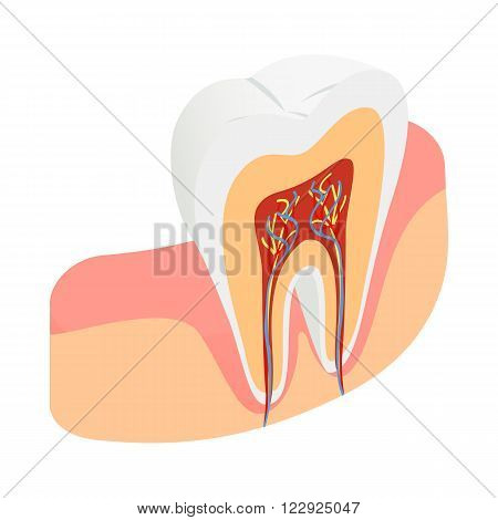 Tooth cross section icon in isometric 3d style on a white background