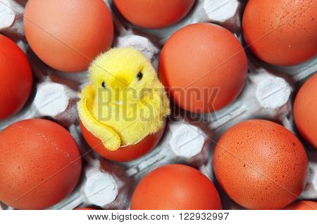 the toy chicken sits in a shell of an Easter egg among red Easter eggs