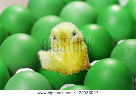 toy chicken sit in a shell of an Easter egg between green Easter eggs
