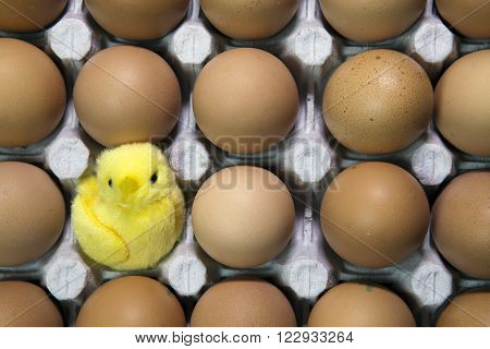 toy chicken in shell of egg between eggs in packing