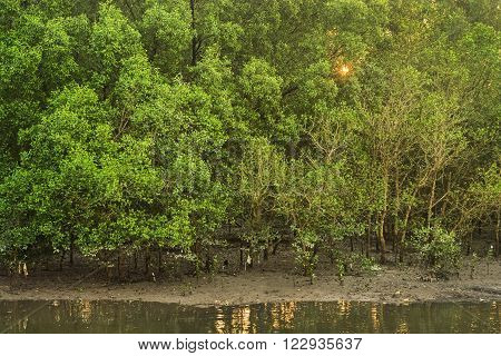 Mangrove forest in low tide river canal