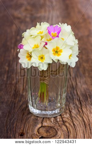 bouquet of pale yellow primroses in glass wine glasses on an old wooden board in the cracks