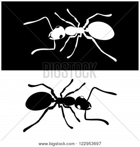 Isolated illustration two ants icon vector image