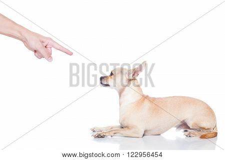 Dog And Owner Punish