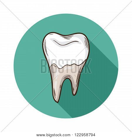 Tooth icon.Vector Tooth icon isolated with shadow.Hand draw Tooth vector.Vector  human Tooth icon isolated on background with shadow