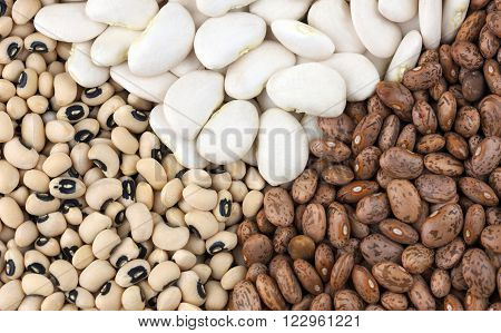 Dried Butter beans,top, with brown Pinto beans and Black Eyed beans also called Black Eyed peas.