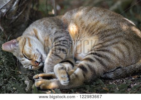 A cat sleeping under a tree, with legs crossed and light spots on body.