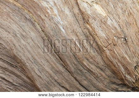 Tree bark texture background, texture of bark wood use as natural background