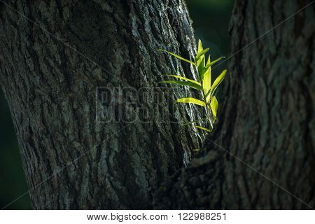 Young and tender branch glowing in light while tough & rough tree bark in shade.