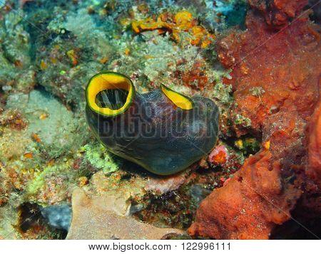 The surprising underwater world of the Bali basin, Island Bali, Pemuteran. Squirt
