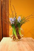 pic of flower vase  - first plants of spring in wooden interior - JPG