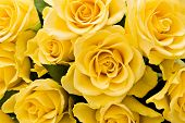 pic of yellow rose  - bouquet of yellow roses for background - JPG
