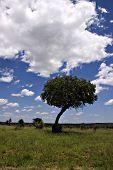 Kruger Park Summer Landscape poster