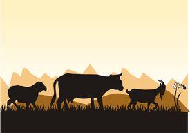 foto of shepherdess  - farm - JPG