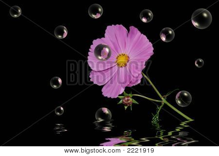 Cosmos In Bubbles