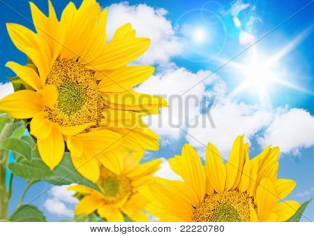 sunflower against blue sky with little honeybee