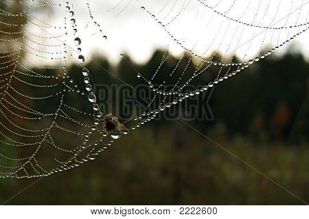 Araña y Midge